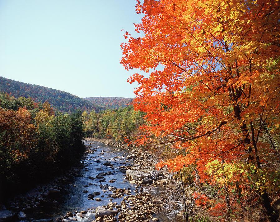 Adam Jones Photograph - USA, Maryland, Potomac State Forest by Adam Jones