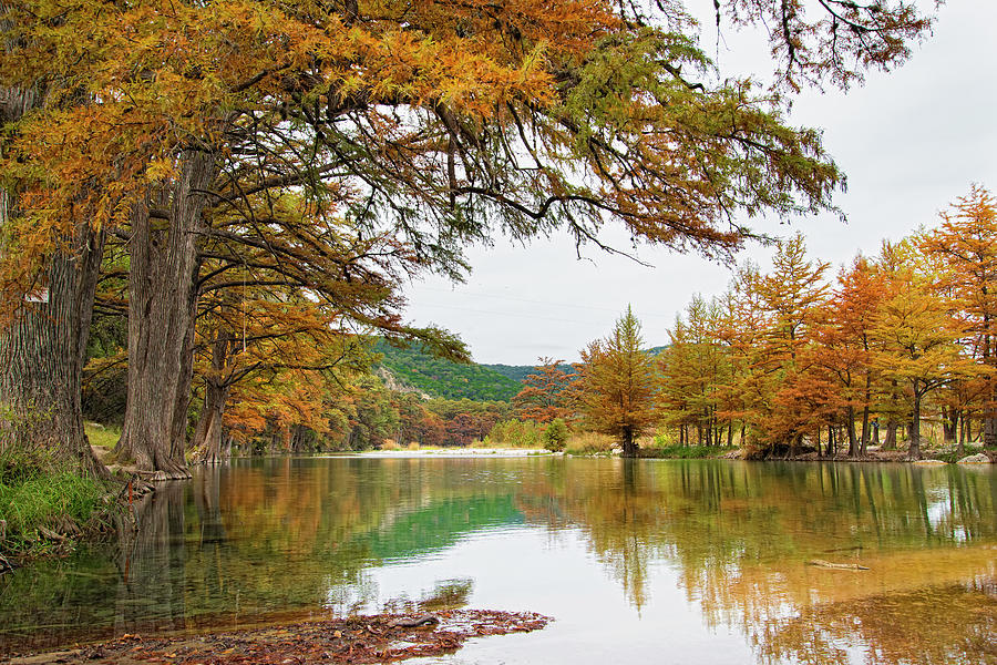Usa, Texas, Cypress Tree With Golden Photograph by Westend61