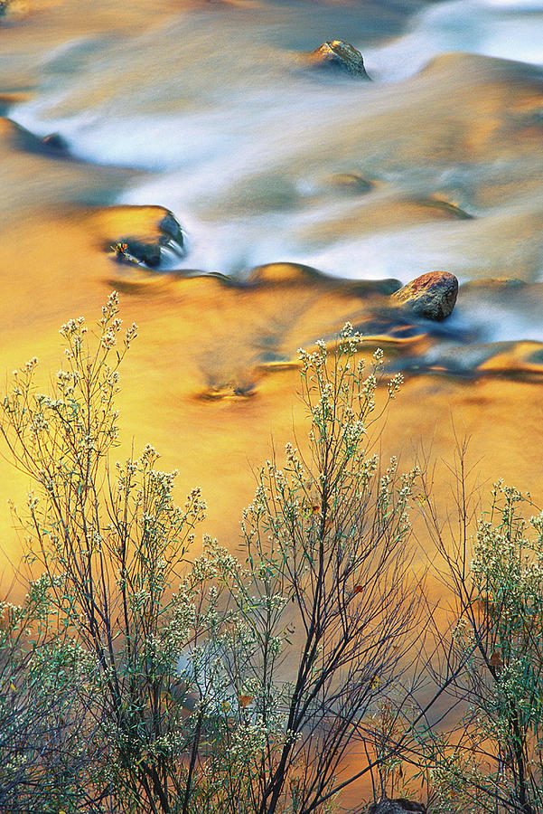 Autumn Photograph - Usa, Utah, Zion National Park, Virgin by Jaynes Gallery