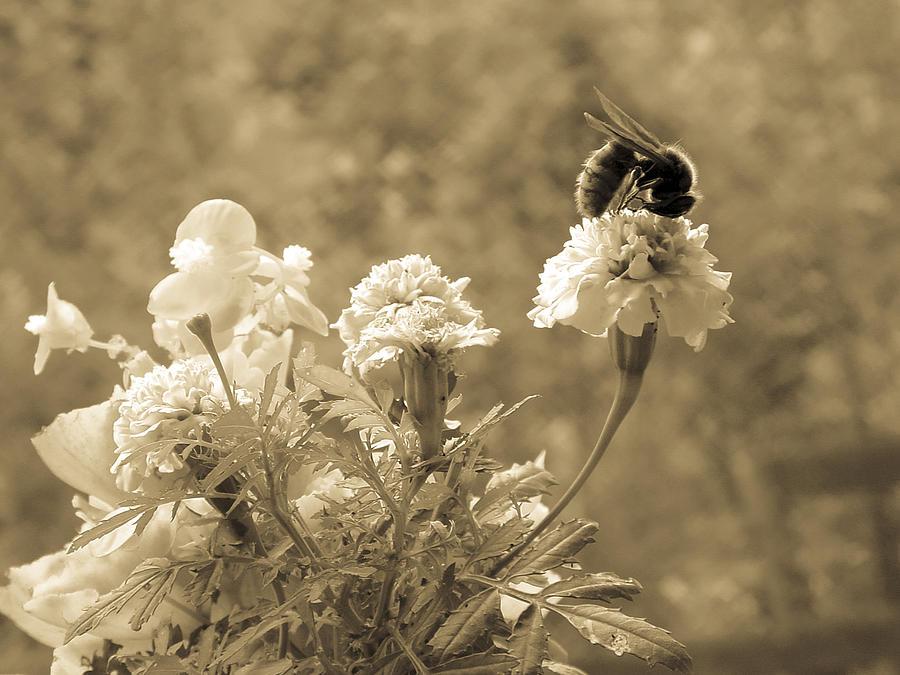 Hornet Photograph - Uummmm  Antique by Robert J Andler