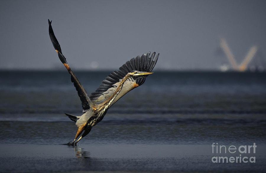 Birds Photograph - V Formation by Richard Mason
