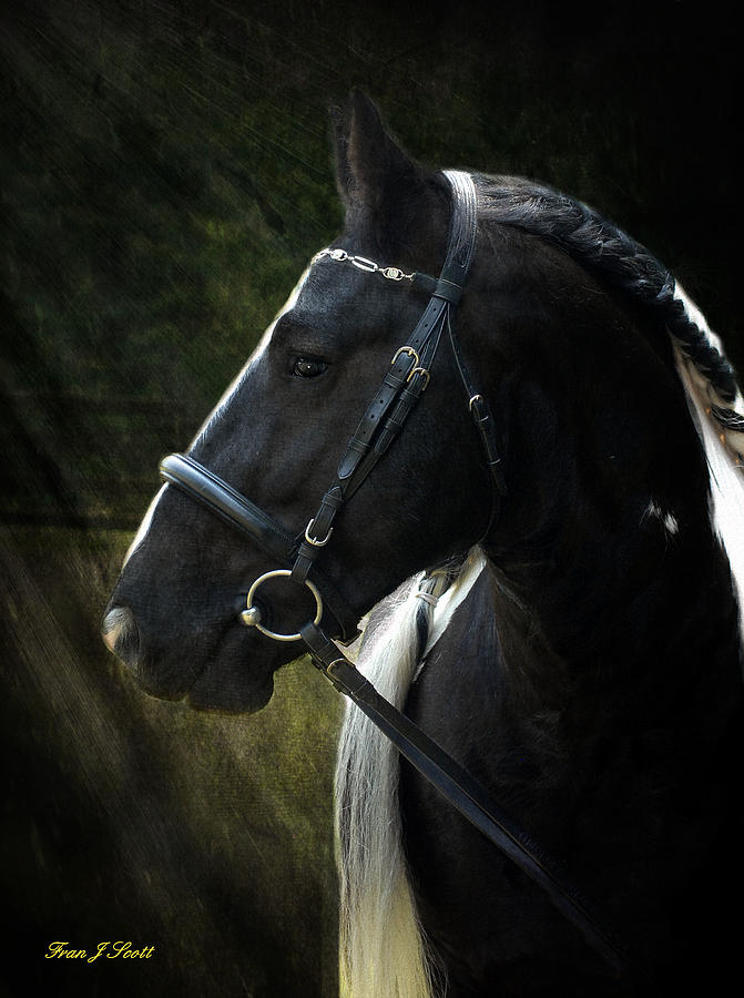 Horses Photograph - Val Headshot by Fran J Scott
