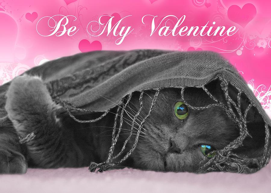Valentine Photograph - Valentine Cat by Joann Vitali