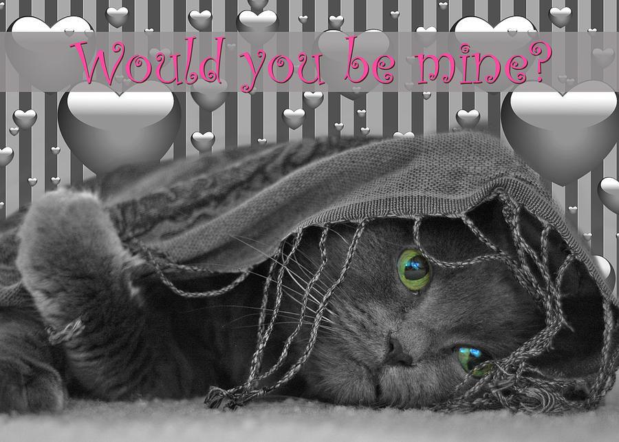 Valentine Photograph - Valentine Day Cat by Joann Vitali