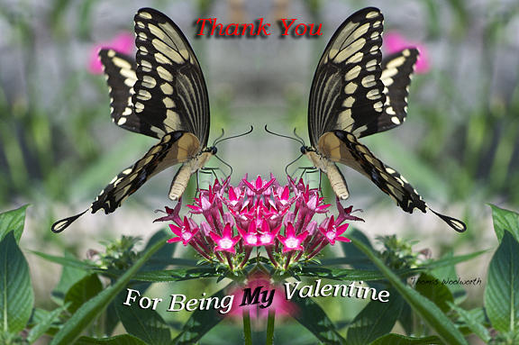 St. Valentine Photograph - Valentine Thank You by Thomas Woolworth