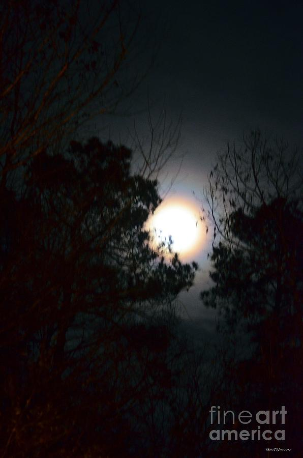 Valley Of The Moon Photograph - Valley Of The Moon by Maria Urso