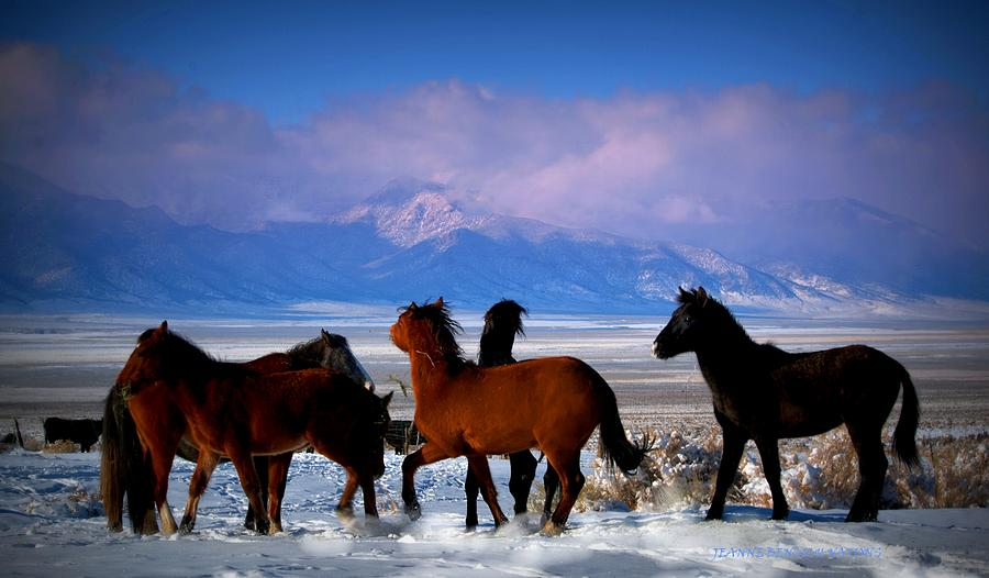 Wild Horses Photograph - Valley Of The Wild Horses  by Jeanne  Bencich-Nations
