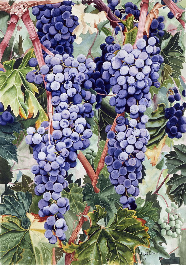 Grapes Painting - Valley Vines by Gael Graysen