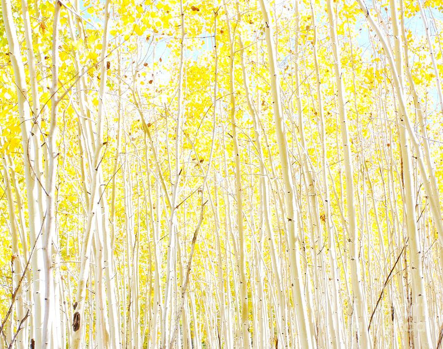 Yellow Photograph - Vanilla Cake by Ruth Jolly