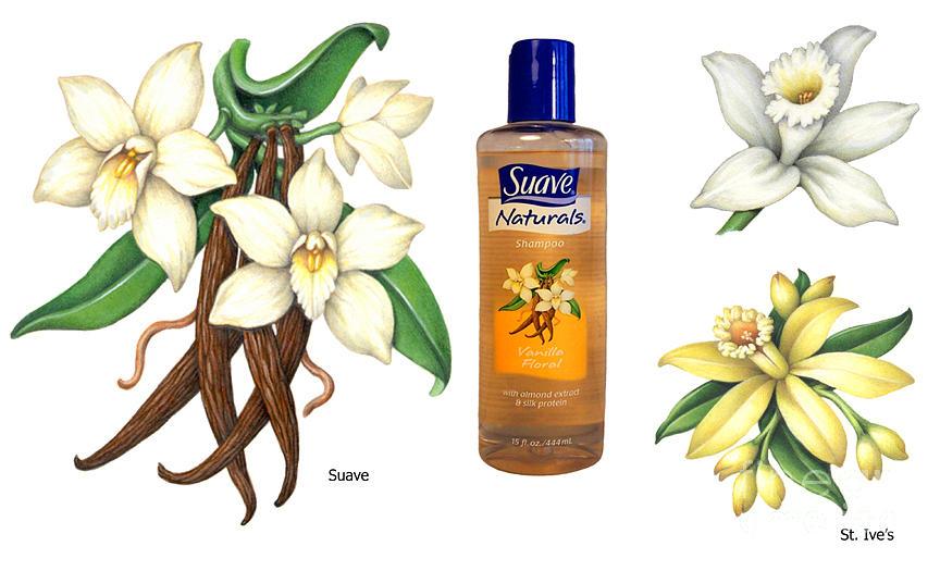 Vanilla Painting - Vanilla Paintings by Douglas Schneider