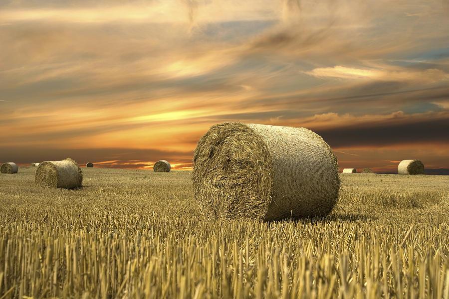 Hay Pyrography - Vanilla Sky by Anna Kaminska