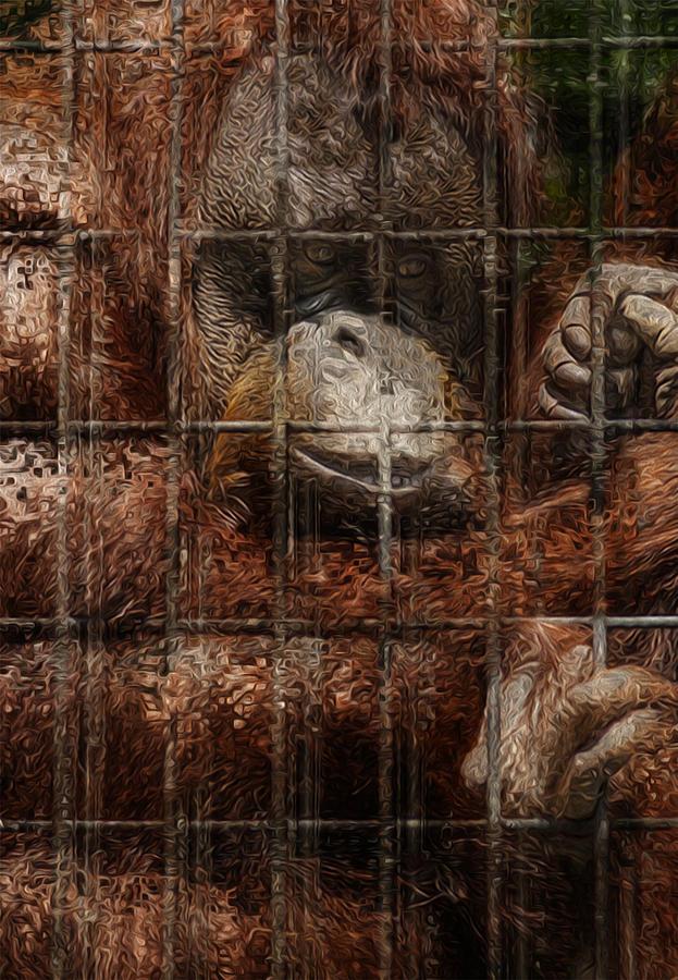 Orangutan Painting - Vanishing Cage by Jack Zulli