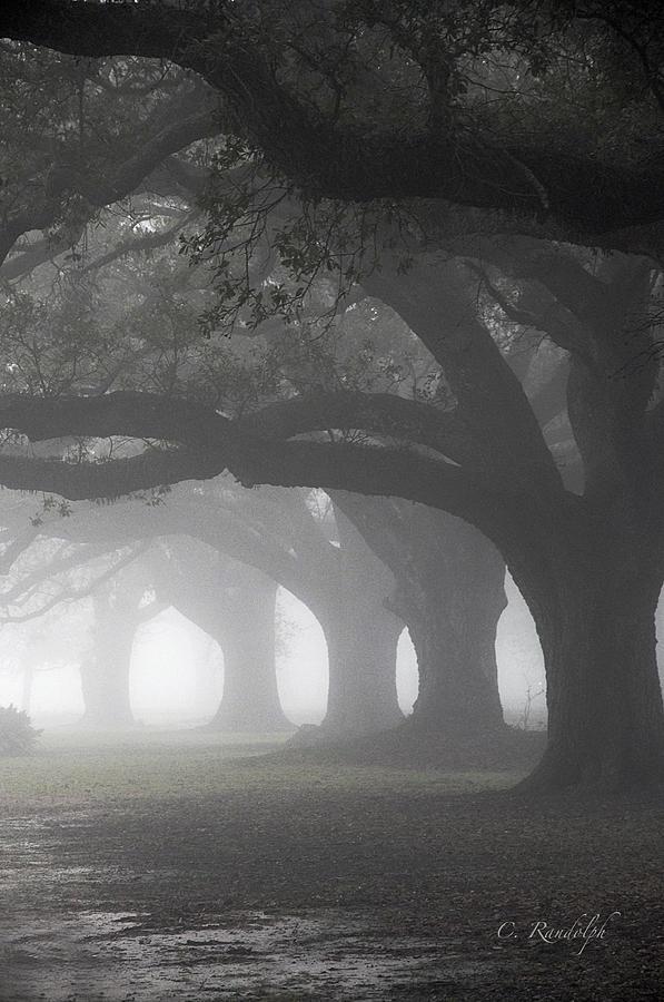 Live Oak Trees Photograph - Vanishing Point by Cheri Randolph