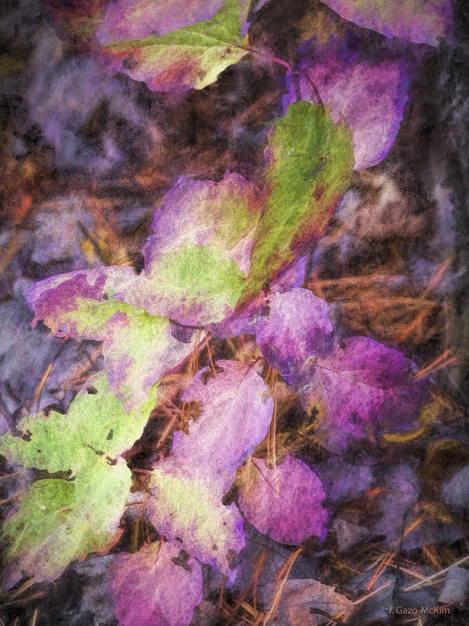 Variations Of Violet Photograph