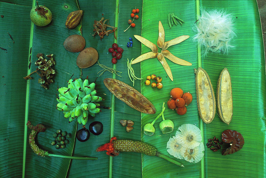 Variety Of Seeds And Fruits Photograph by Christian Ziegler