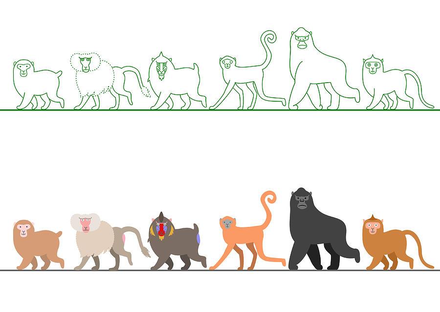 Various Monkey Walking In A Row Digital Art by Ayutaka