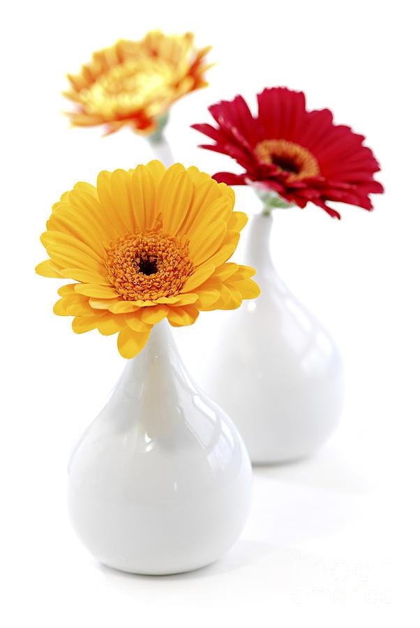 Vase Photograph - Vases With Gerbera Flowers by Elena Elisseeva