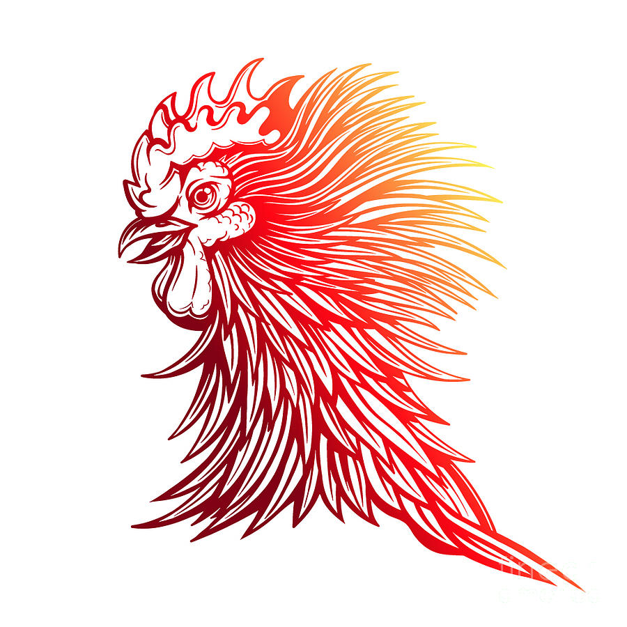big red rooster designed - 900×900