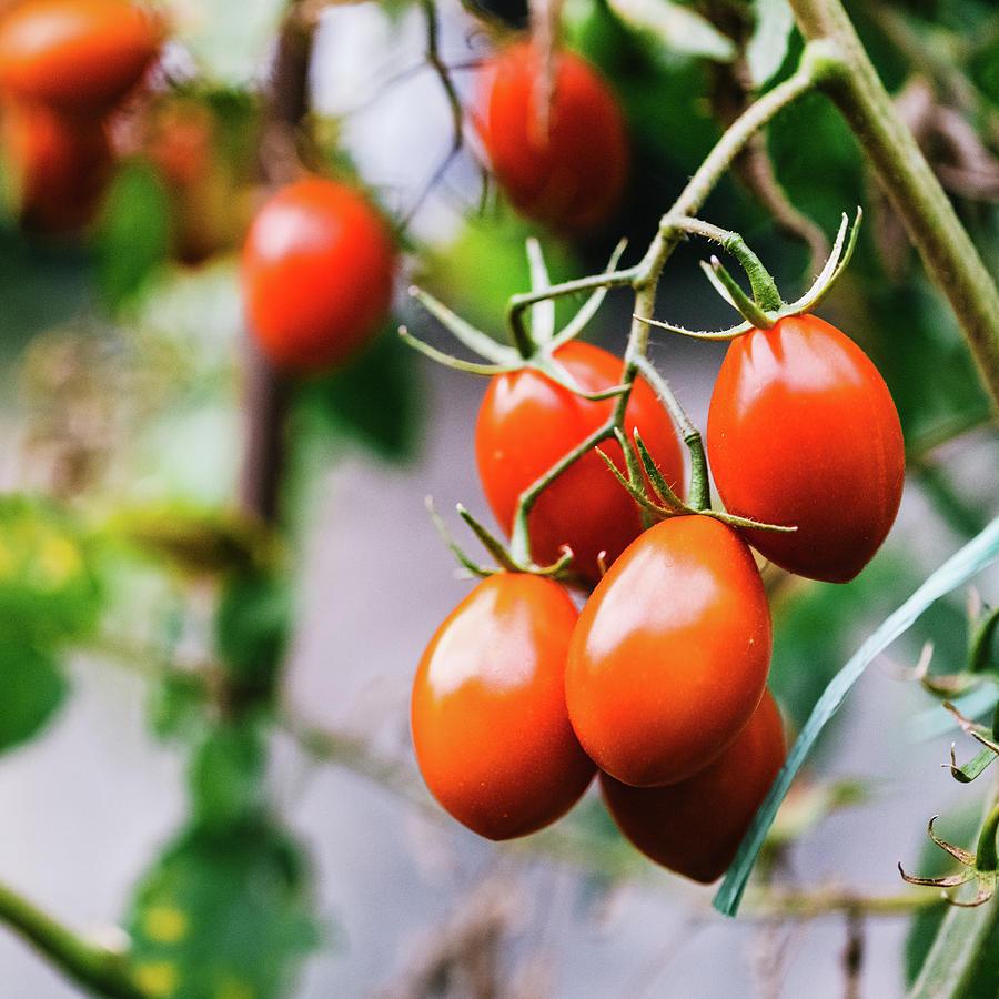 Vegetable Garden Photograph by Deimagine