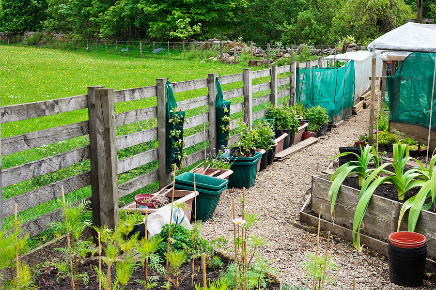 Agriculture Photograph - Vegetable Garden by Tom Gowanlock