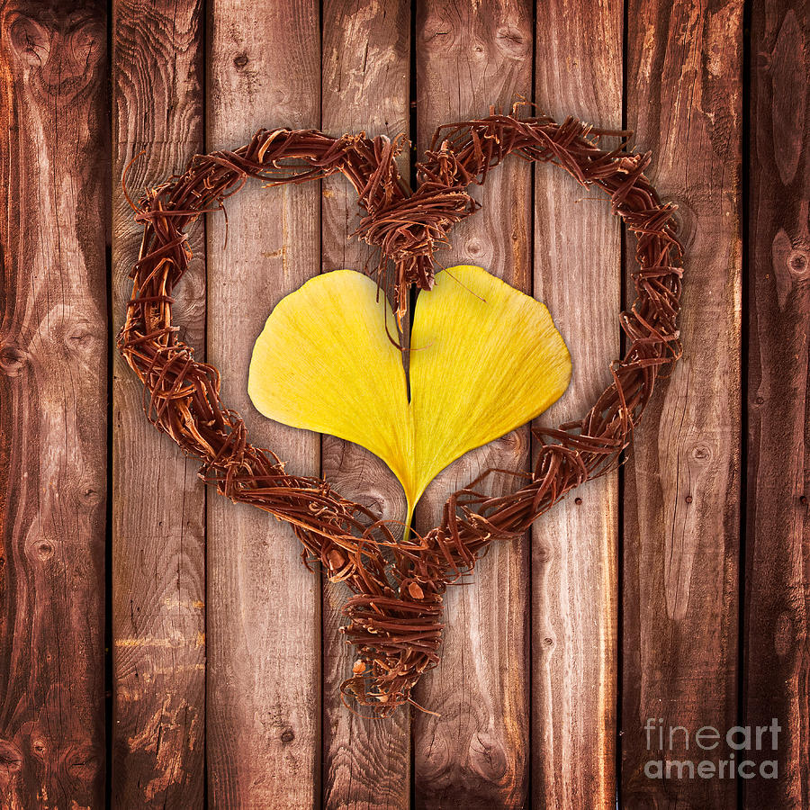 Love Photograph - Vegetal Hearts by Delphimages Photo Creations