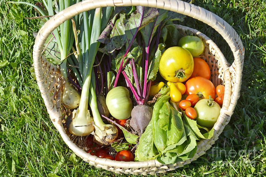 Veggie Delight by Traci Cottingham