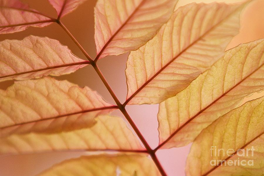 Leaves Photograph - Veins by Andrew Brooks