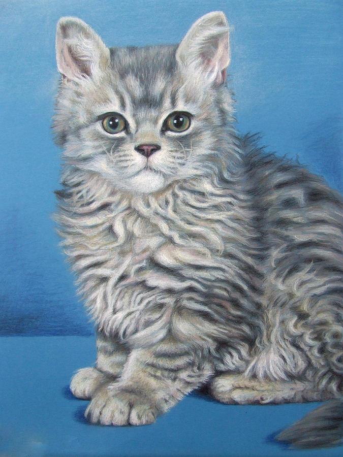 Cat Drawing - Velvet Kitten by Nicole Zeug