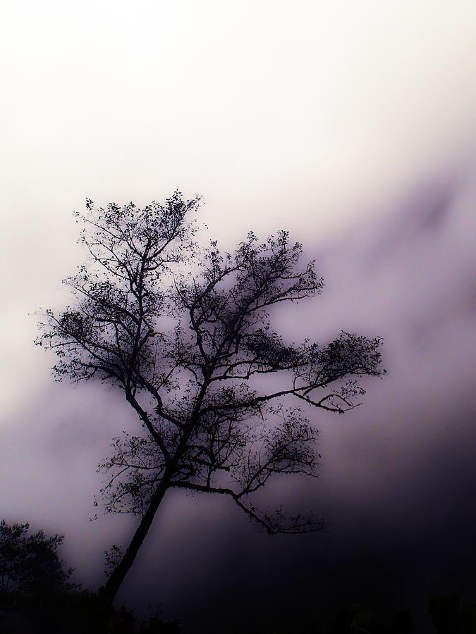 Tree Photograph - Velvet Mist by Tyler Lucas