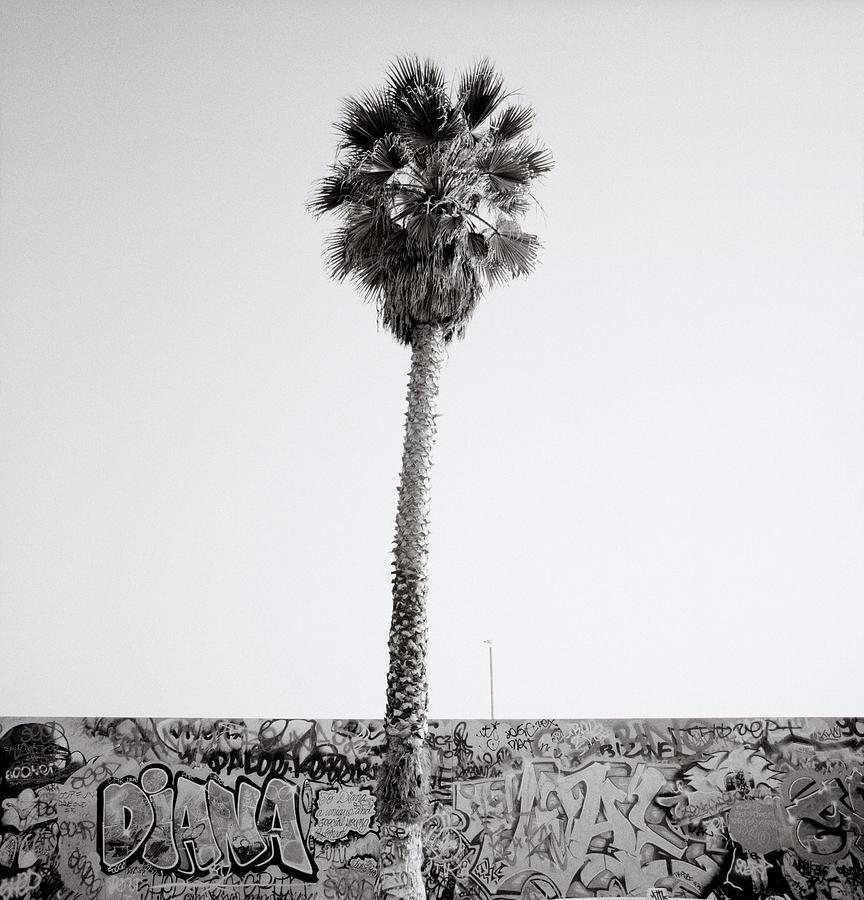 Graffiti Photograph - Venice Beach by Shaun Higson