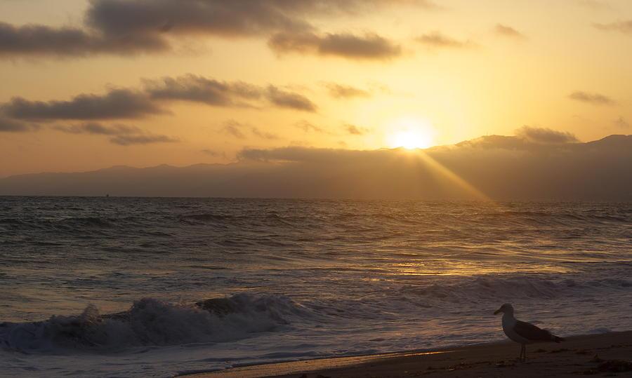 Venice Photograph - Venice Beach Sunset by Rollie Robles