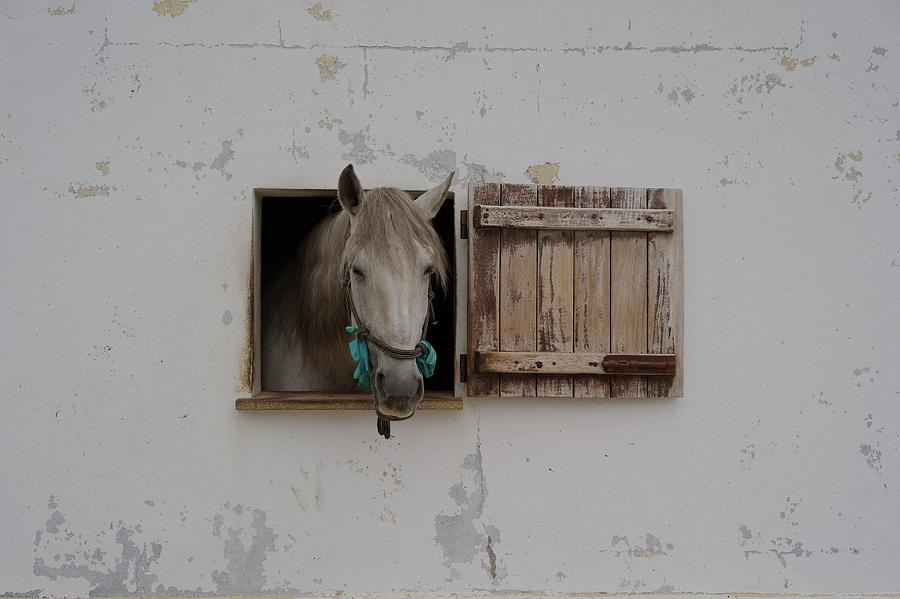Horse Photograph - Ventania by Carey Coombs