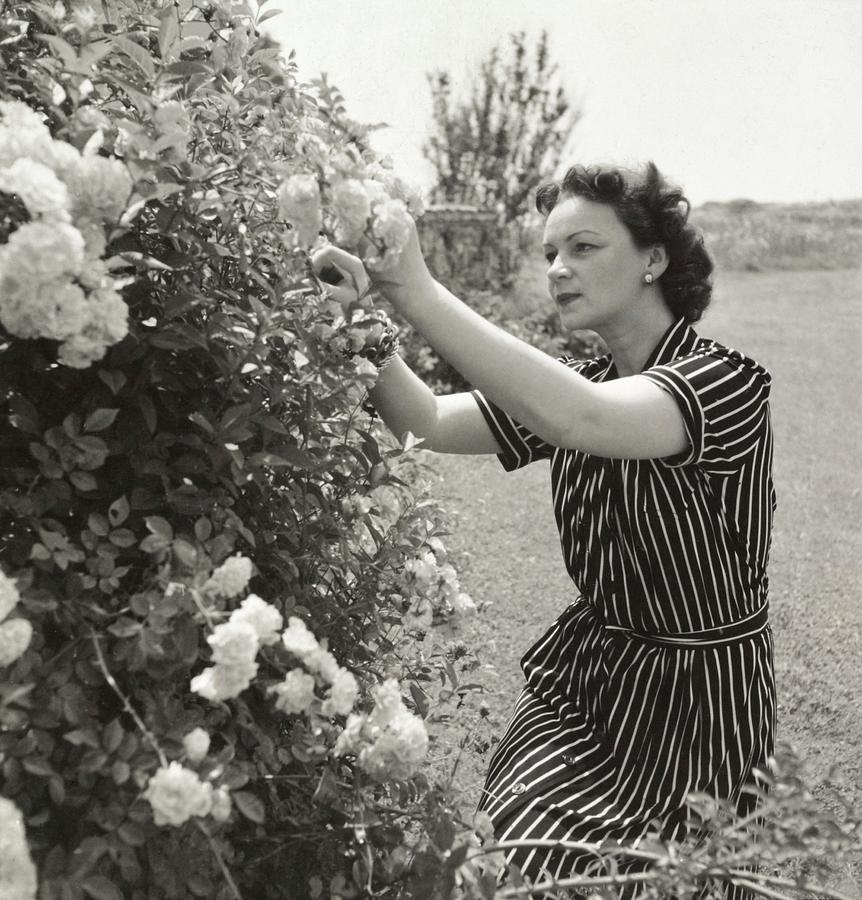 Vera Lounsbery Gardening Photograph by John Rawlings