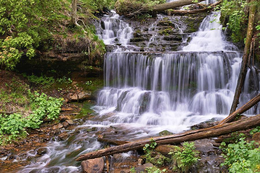 Verdure of Wagner Falls by Dylan Lees