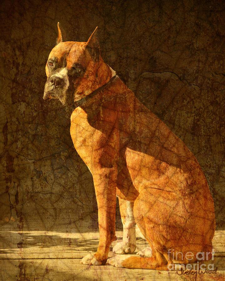 Dog Digital Art - Vermeers Dog by Judy Wood