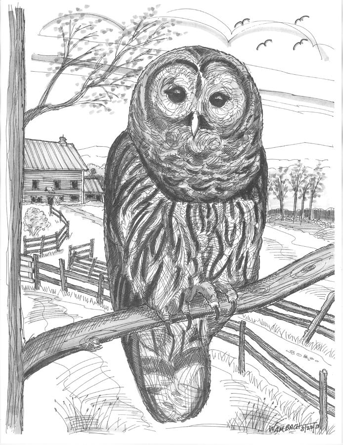 It is an image of Sweet Barred Owl Drawing