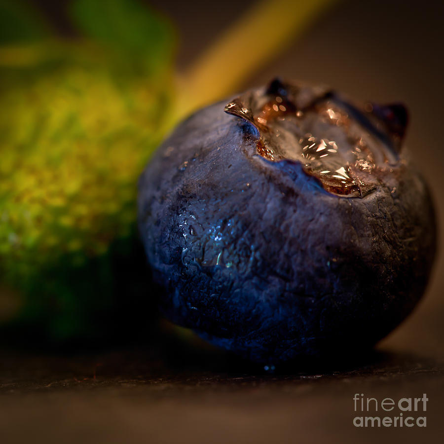 Blueberry Photograph - Very Blueberry Square by Patricia Bainter