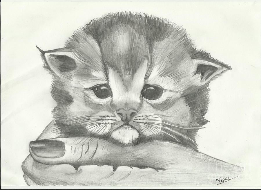 very cute kitten sketch drawing by vipul dhongade