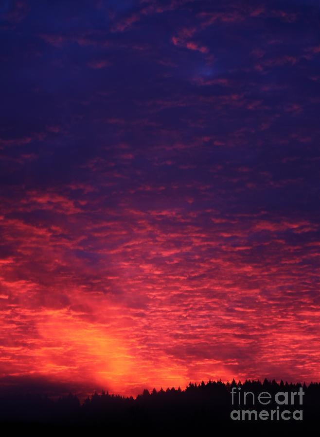 Sunrise Photograph - Vibrant Dawn by Erica Hanel