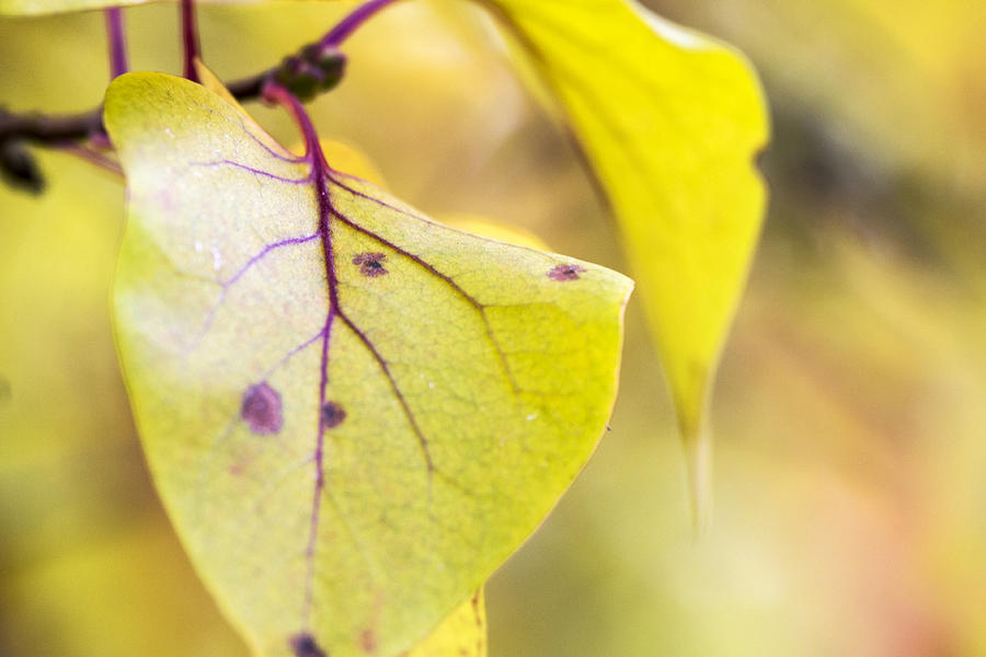 Autumn Photograph - Vibrant Leaves by Dana Moyer