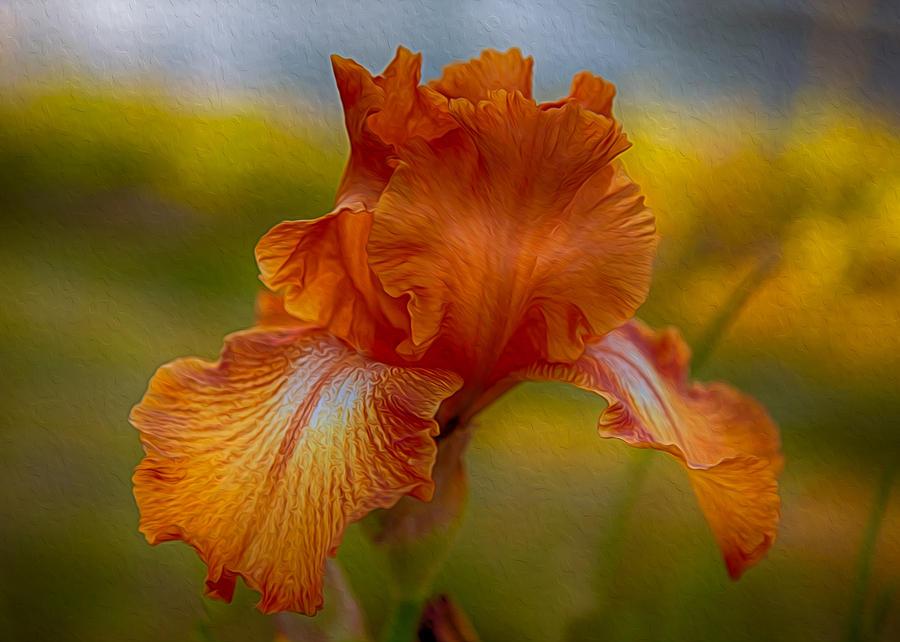 Vibrant Orange Iris by Omaste Witkowski