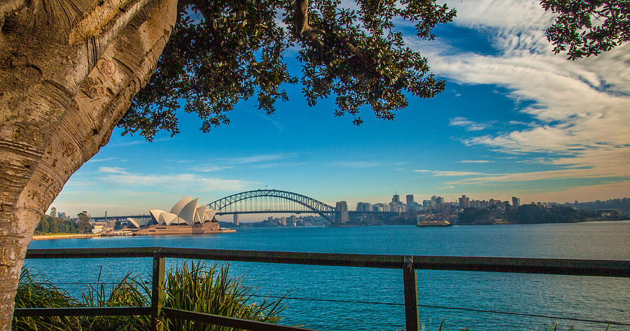 Sydney Photograph - View From Lady Macquaries Chair by Dasmin Niriella