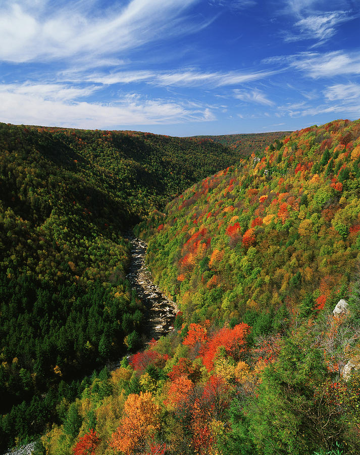 View Of Blackwater Canyon In Autumn Photograph by Danita Delimont