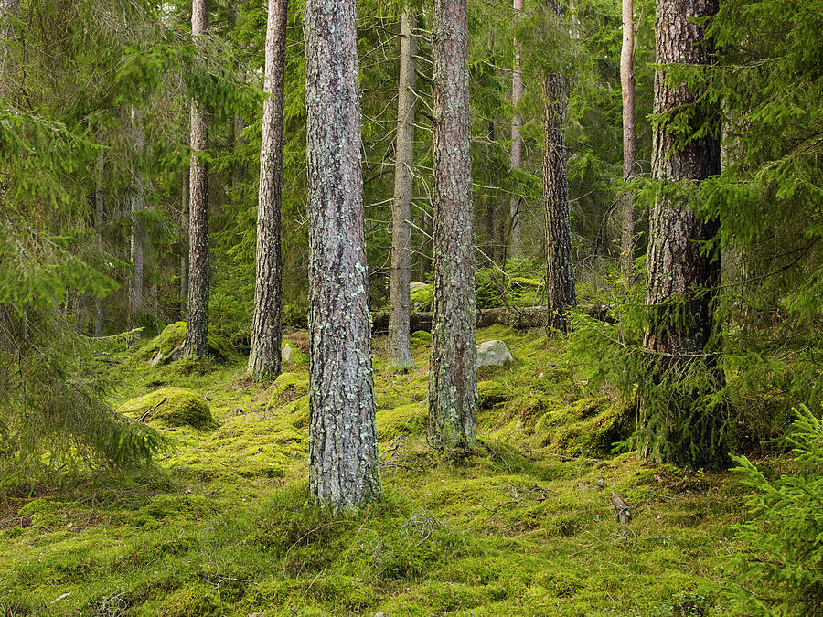 View Of Forest Photograph by Johner Images