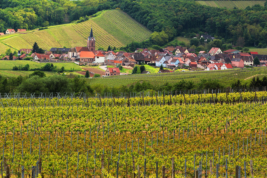 Vineyards Photograph - View Of Rodern From The Vineyards Of Alsace by Greg Matchick