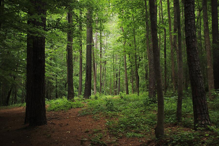 View Of Trees In Forest Photograph by Morgan Sarkissian / EyeEm
