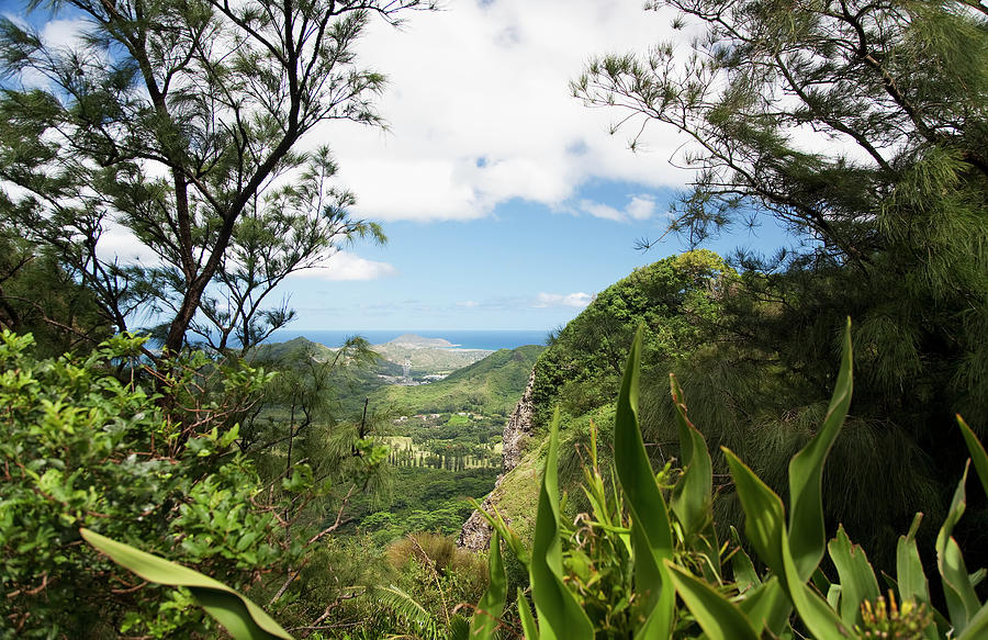 Viewpoint Near Nuuanu Pali Lookout Photograph by Brandon Tabiolo / Design Pics