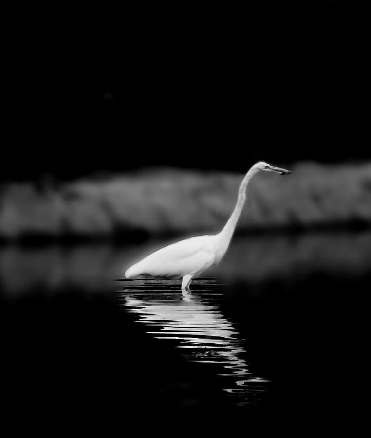Egret Photograph - Vigilance by Eileen Shahbazian