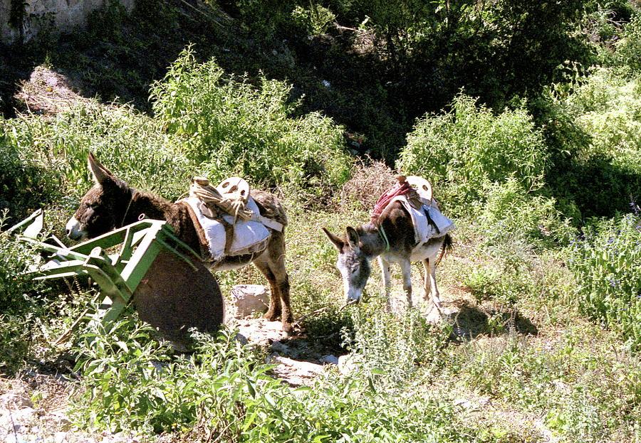 Donkey Photograph - Village Transportation by Michael Peychich