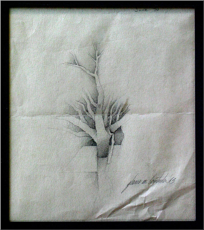Vine Drawing - Vine And Branches A 1969 by Glenn Bautista
